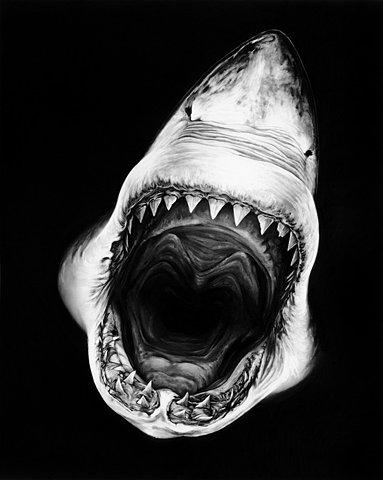 Lo squalo di roberto longo for Disegno squalo