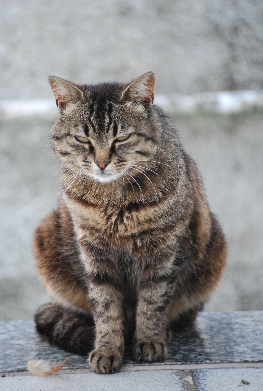 Lettiere per gatti quale scegliere for Migliore lettiera per gatti