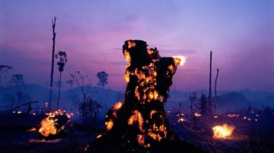 Brasile-in-fiamme-ma-il-governo-legalizzerà-la-deforestazione-2-e1453114928302