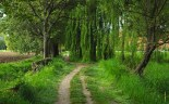 1024-paesaggio_agricoltura_giuseppemazza